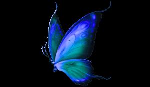 schmetterling blau transparent gespiegelt