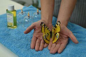 Dekoration von Schröpfgläsern mit Öl und Schmetterling