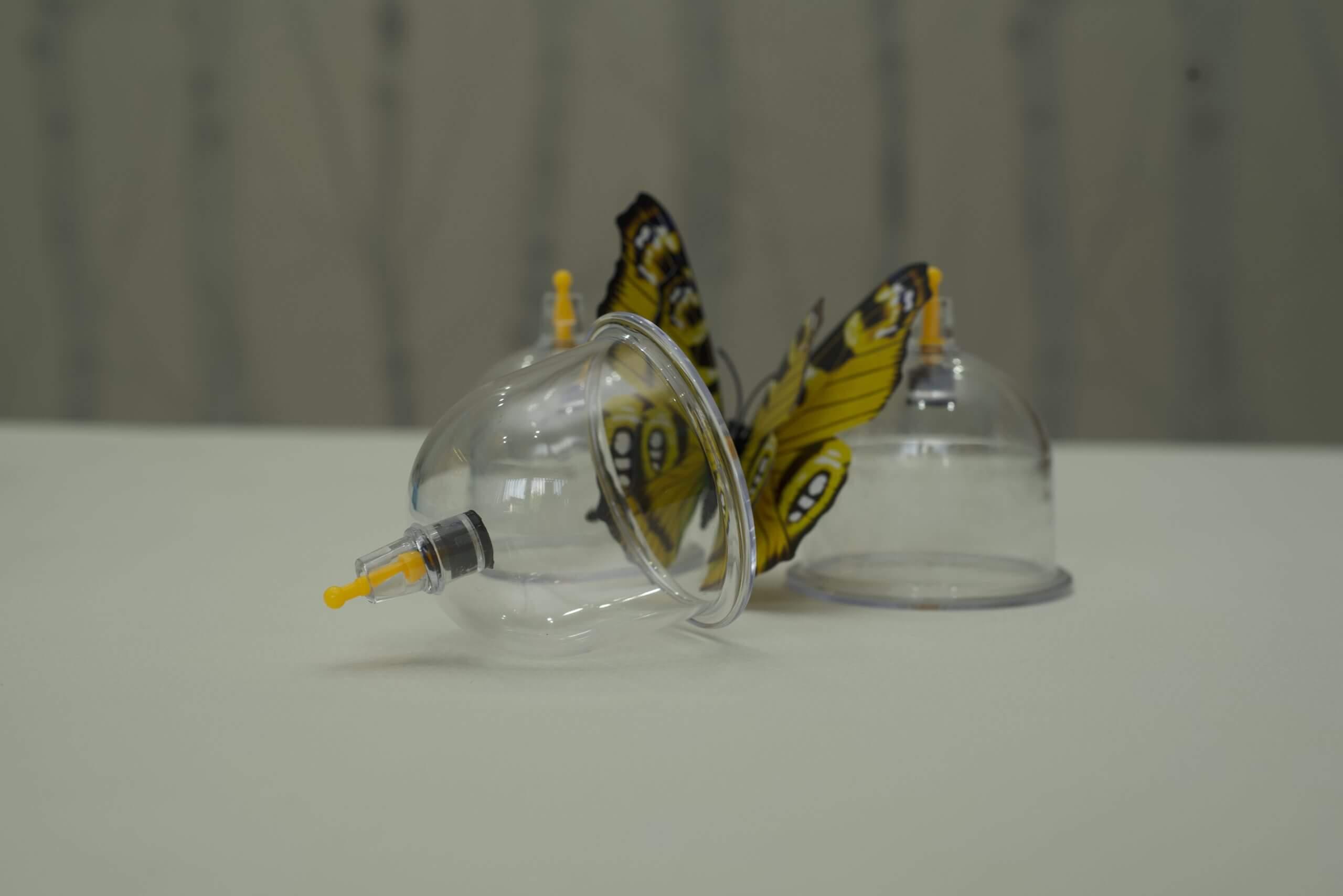 Dekoration aus Schröpfgläsern mit Schmetterling