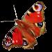 schmetterling-rot-transparent